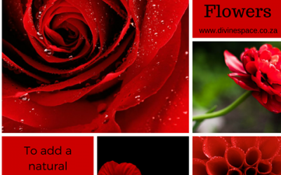 FOCUS ON THE COLOUR RED